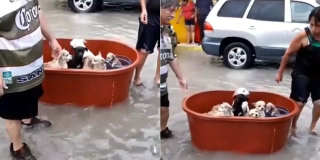 A couple in northeastern Mexico was able to rescue their puppies from the floodwaters from Hurricane Hanna..