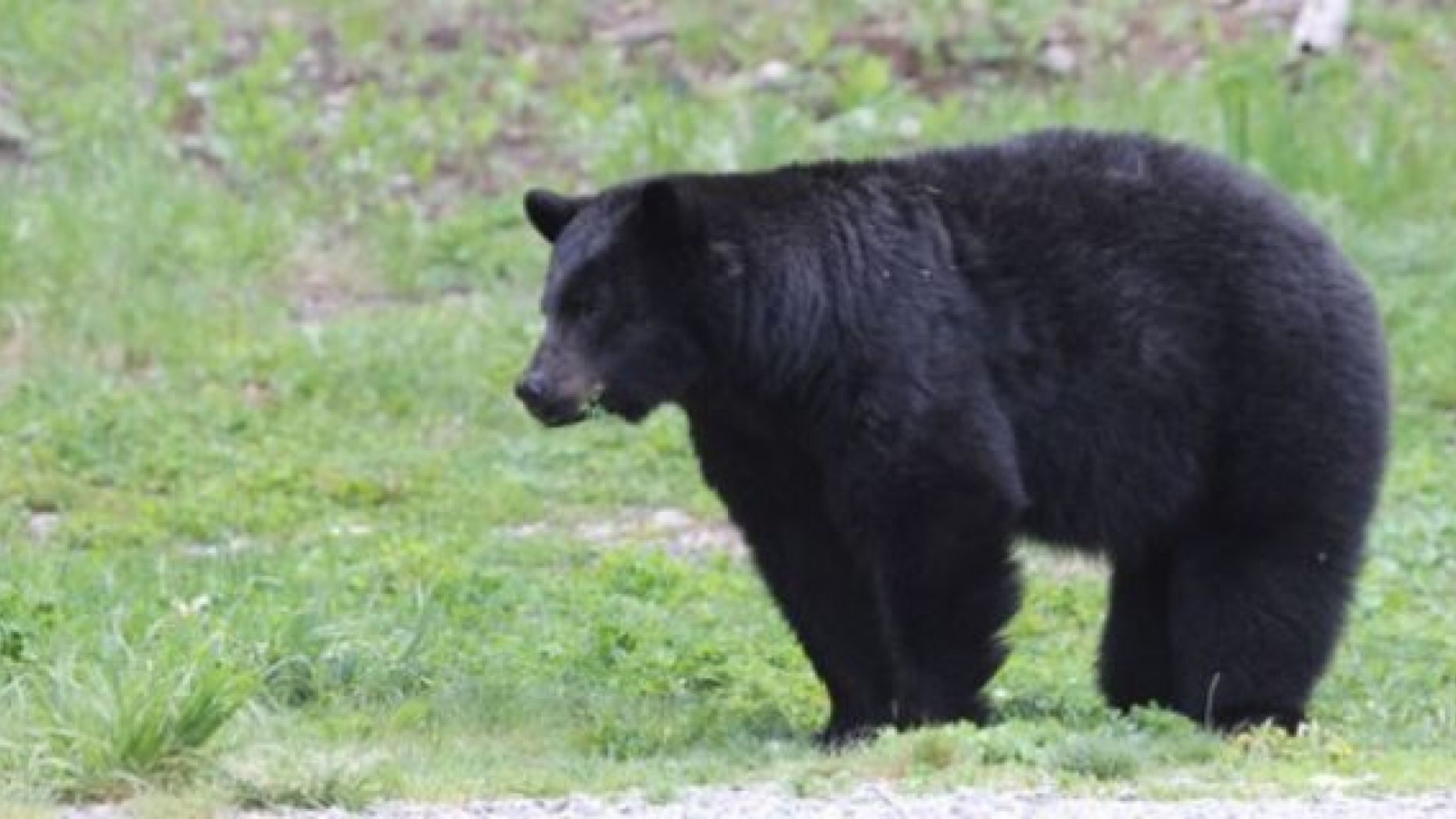 A woman was on the phone with her father when she was killed by a black bear in Canada.